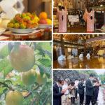 2020年6月11日大阪天満宮にて黄梅祭